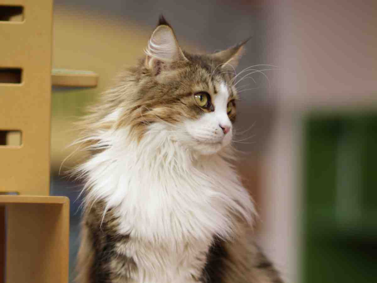 The Best Water Fountains For Maine Coon Cats (2020 Reviews)